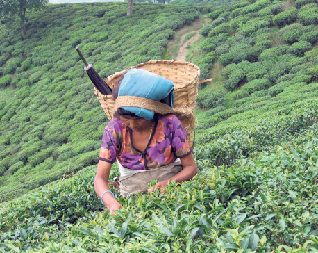 Report to address problem of tea sector gathers dust