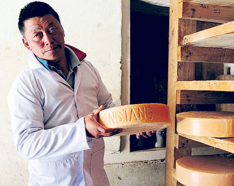 Cheese production resumes in Langtang
