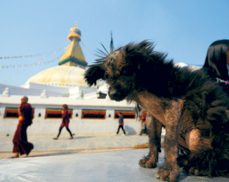No Dog Tihar for strays