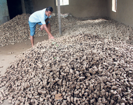 Govt steps up efforts to lift ban on ginger export