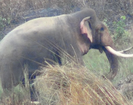 Indian tourist killed in elephant attack