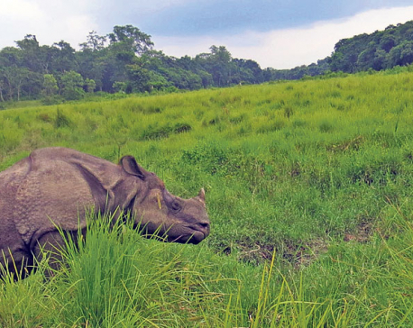 Rhino death from bullet wounds ends zero poaching