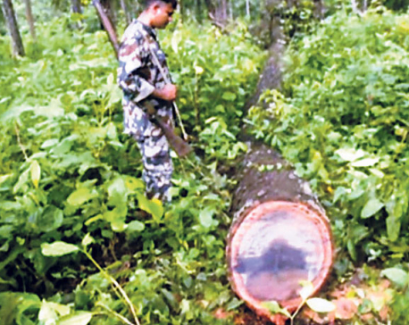 Rampant timber smuggling going unchecked