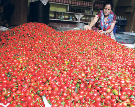 Incredible returns pull farmers into Akabare chili farming