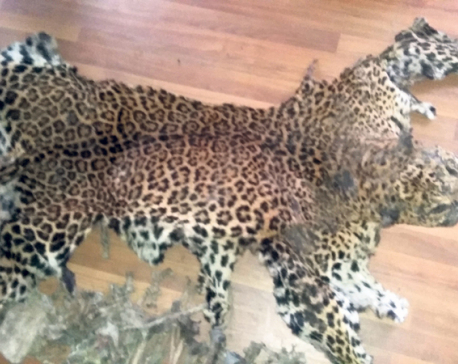 Two held with leopard skin