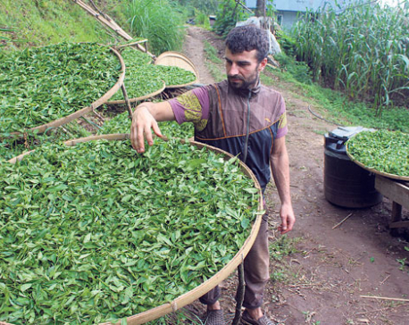 Demand for Nepali tea improves in foreign markets