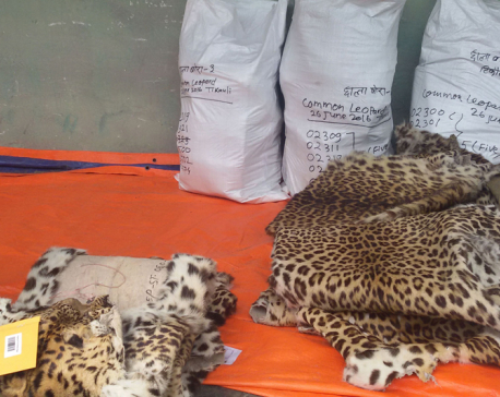 Disposing of stored body parts of wild animals at CNP starts