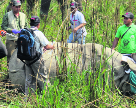 Three CNP rhinos translocated to Bardia amid protests