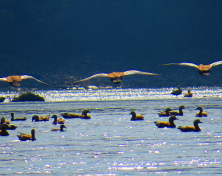 In the empire of birds (Photo Feature)