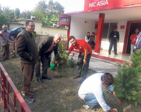 NIC Asia organizes tree plantation
