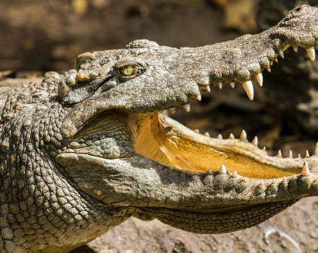 10 crocodiles break loose from Thailand zoo