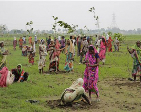 India state aims to plant a record 50 million trees in a day