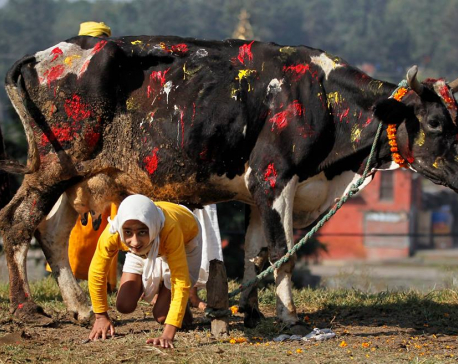 Gai Puja, Goru Puja and Govardhan Puja today