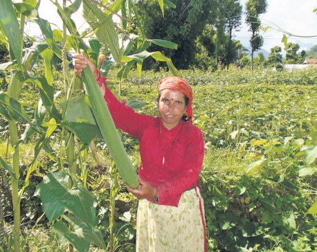 Women Rule in Nepali Agriculture