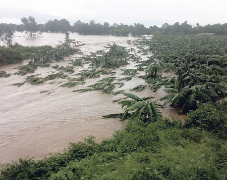 Flood hits fish, poultry and banana farming