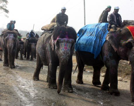 Elephant Festival kicks off in Sauraha