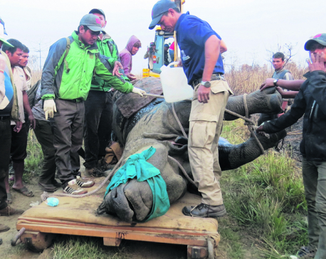 Rhinos fighting for survival in new location