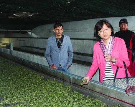 Chinese ambassador praises Ilam tea