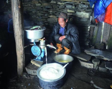 Animal husbandry fails to woo highland youths