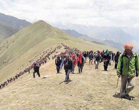 Students swarm uplands to pick Yarsagumba