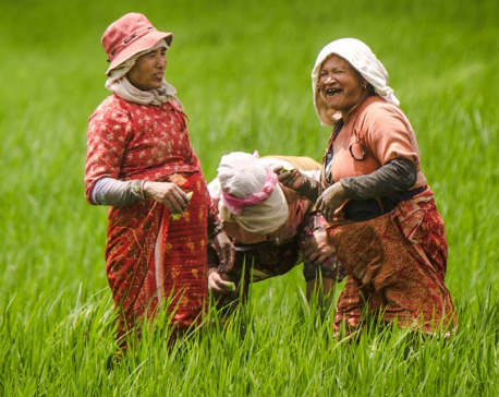 In pictures: Farmers busy weeding