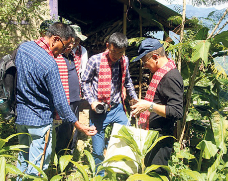 Chinese traders eying Nepali cardamom