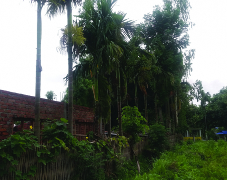 Encroachment of forest continues unabated