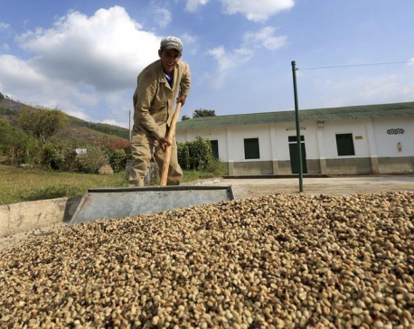 Colombia to create fund to help coffee growers amid low prices