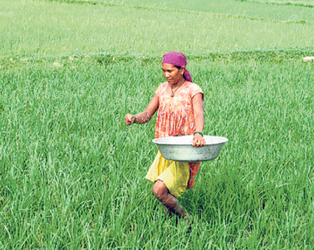 Competitive capacity should be increased in agriculture sector: FM Khatiwada
