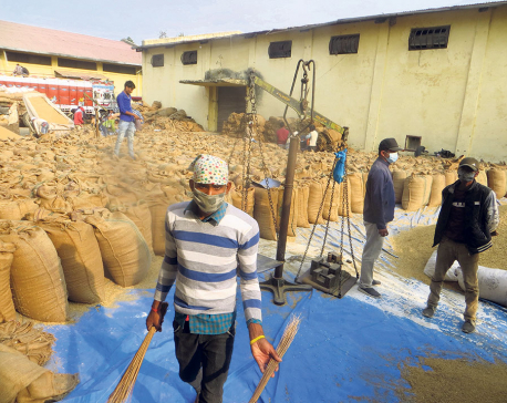 Farmers relieved as NFC offers better price for paddy