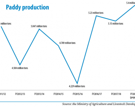 Paddy production seen increasing to 5.4 million tons