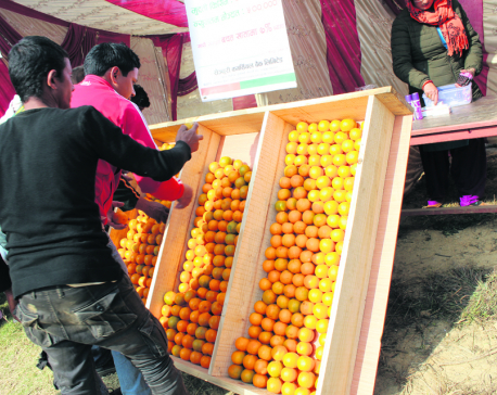 Third Orange festival Kicks off in Baglung