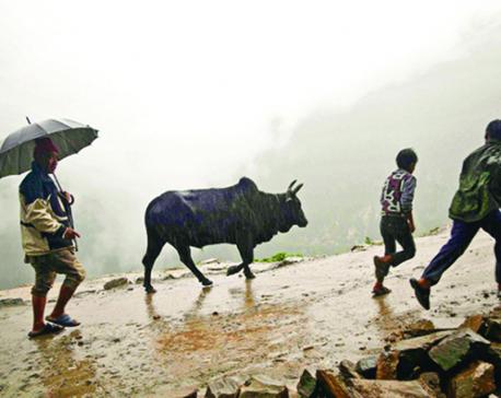 Monsoon pain