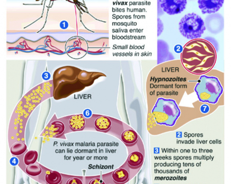 Infographics: Malaria one-dose treatment