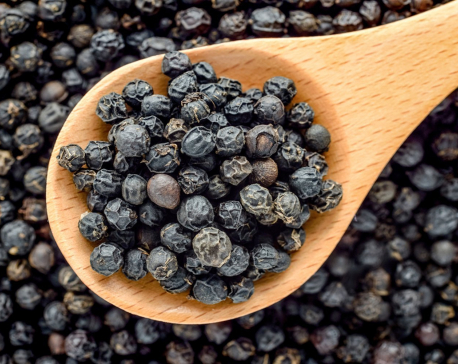 Farmers concerned over slackened price of black pepper