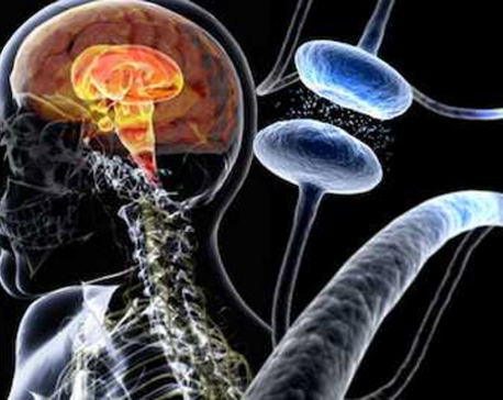 Stem cells to be transplanted into brains of Parkinson's patients in world-first trials