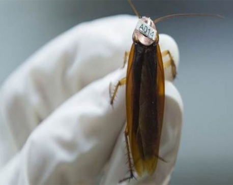 Scientists built a robotic cockroach that can walk on water