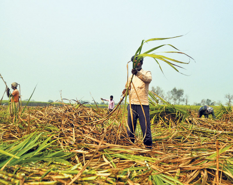 Sugarcane farmers still waiting for payment