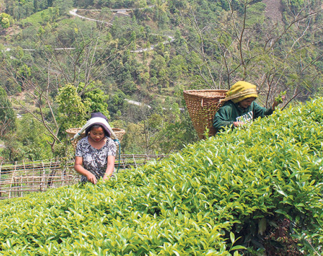 Only five percent of tea farmers take loans to expand business: Report