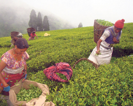 Green leaves production down by half