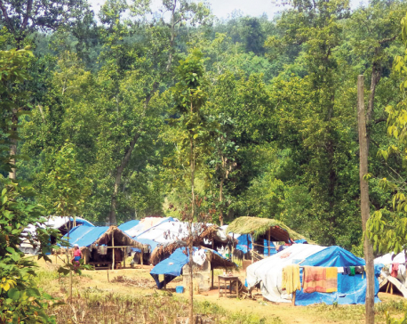 Forest land continues to shrink 'for resettlement'