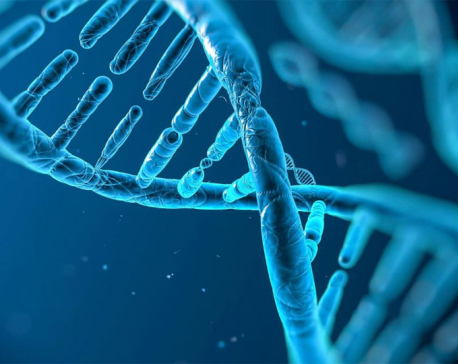 Cancer-causing virus HTLV-1 changes DNA loops to 'affect tens of thousands of genes'