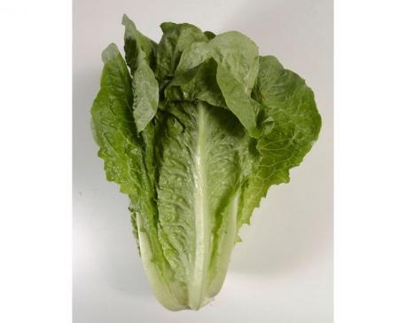 5 dead, nearly 200 sickened in romaine lettuce outbreak