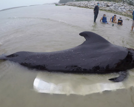 Whale dies from eating more than 80 plastic bags