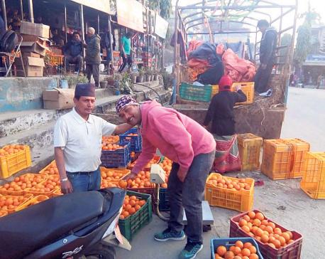 Technicians bringing citrus fly infestation under control