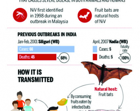 Infographics: What is Nipah virus?