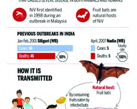 Infographics: What is Nipah virus?