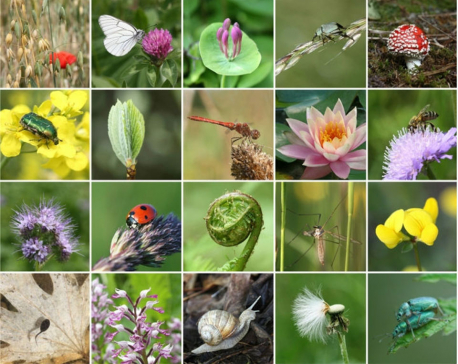 Int'l Biological Diversity Day today