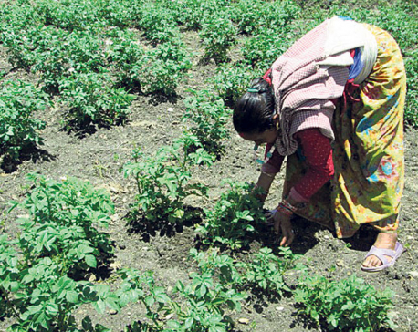 Schools switch to farming to pay teachers' salaries