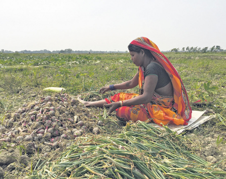Landless communities turn fallow lands into burgeoning farms